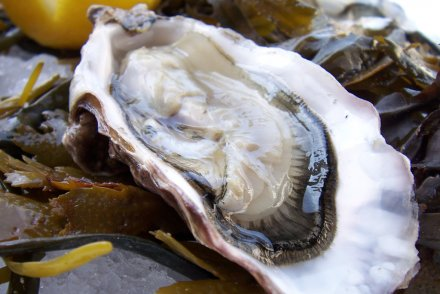 oyster week