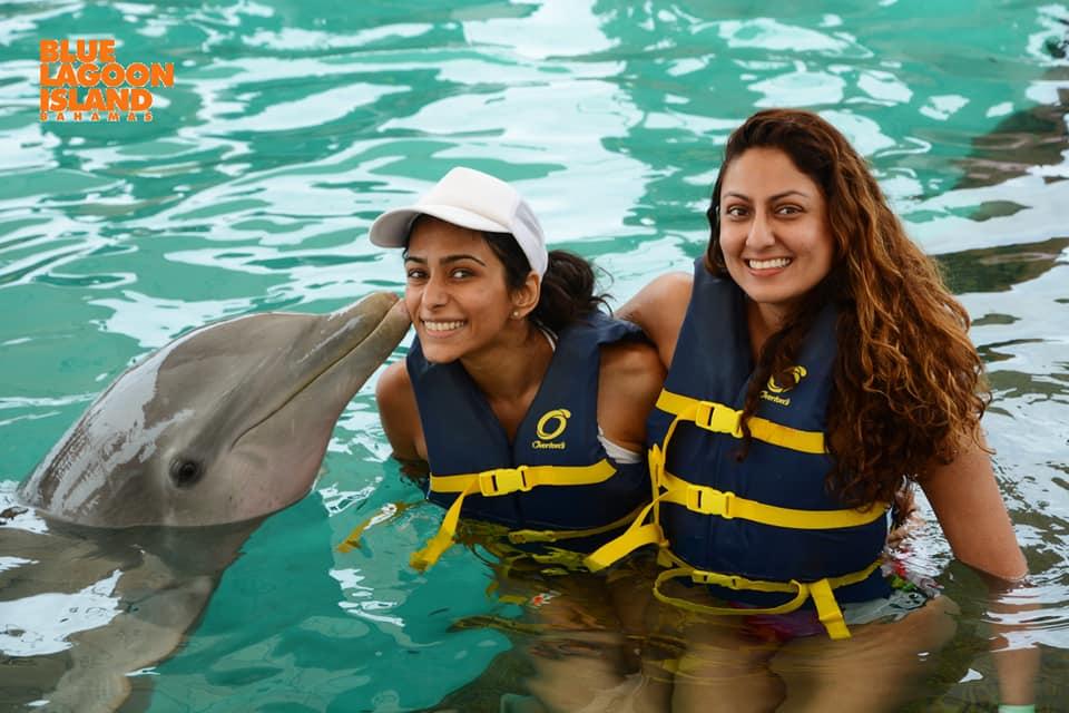 blue lagoon island dolphins