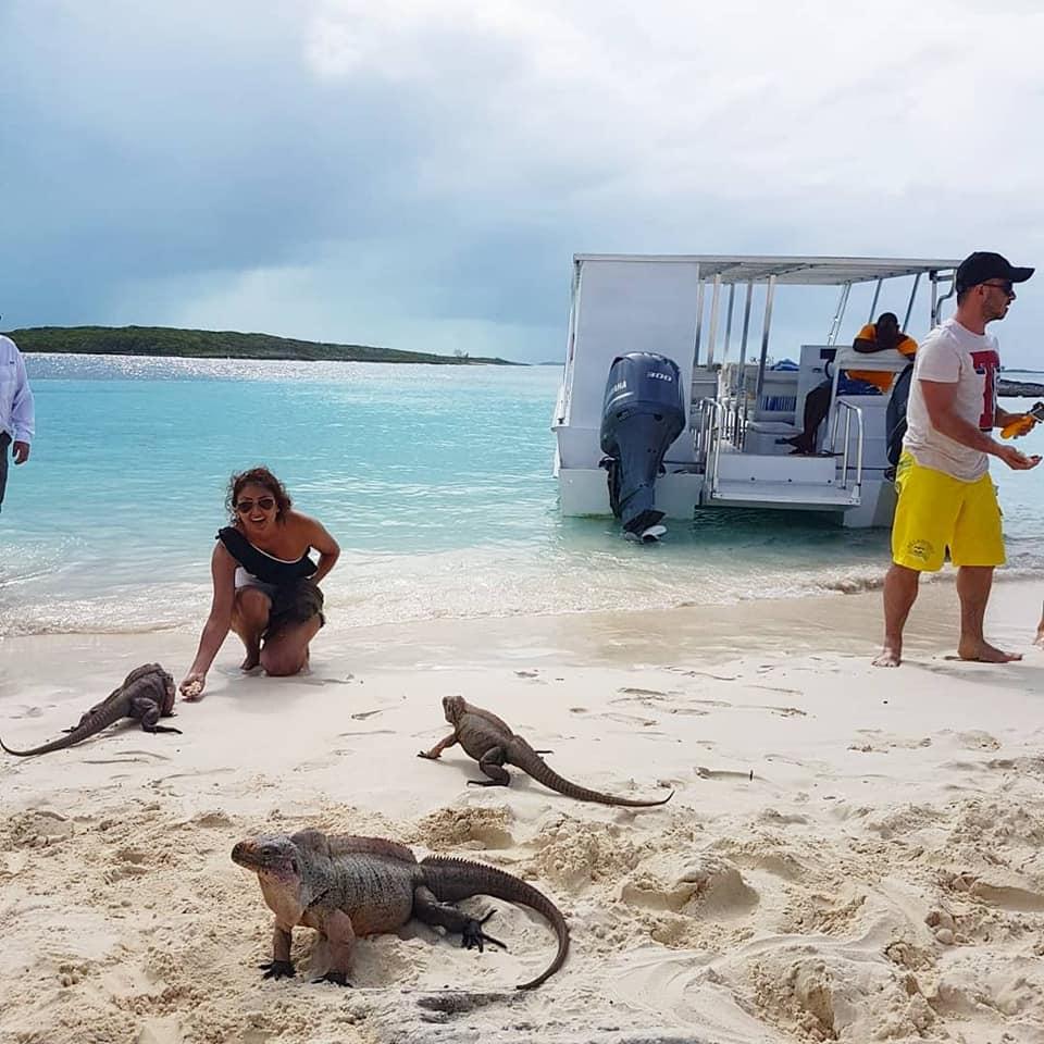 iguanas bahamas