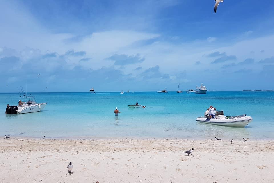 pig beach bahamas 11